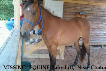 MISSING  EQUINE Babydoll,  Near Canton, GA, 30114
